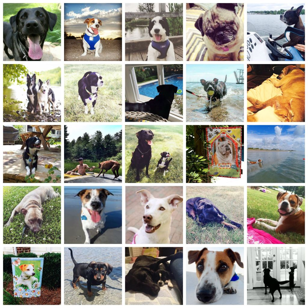 personalized pet flags