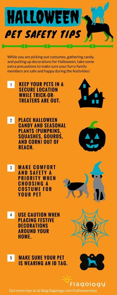 halloween pet safety tips for dogs and cats