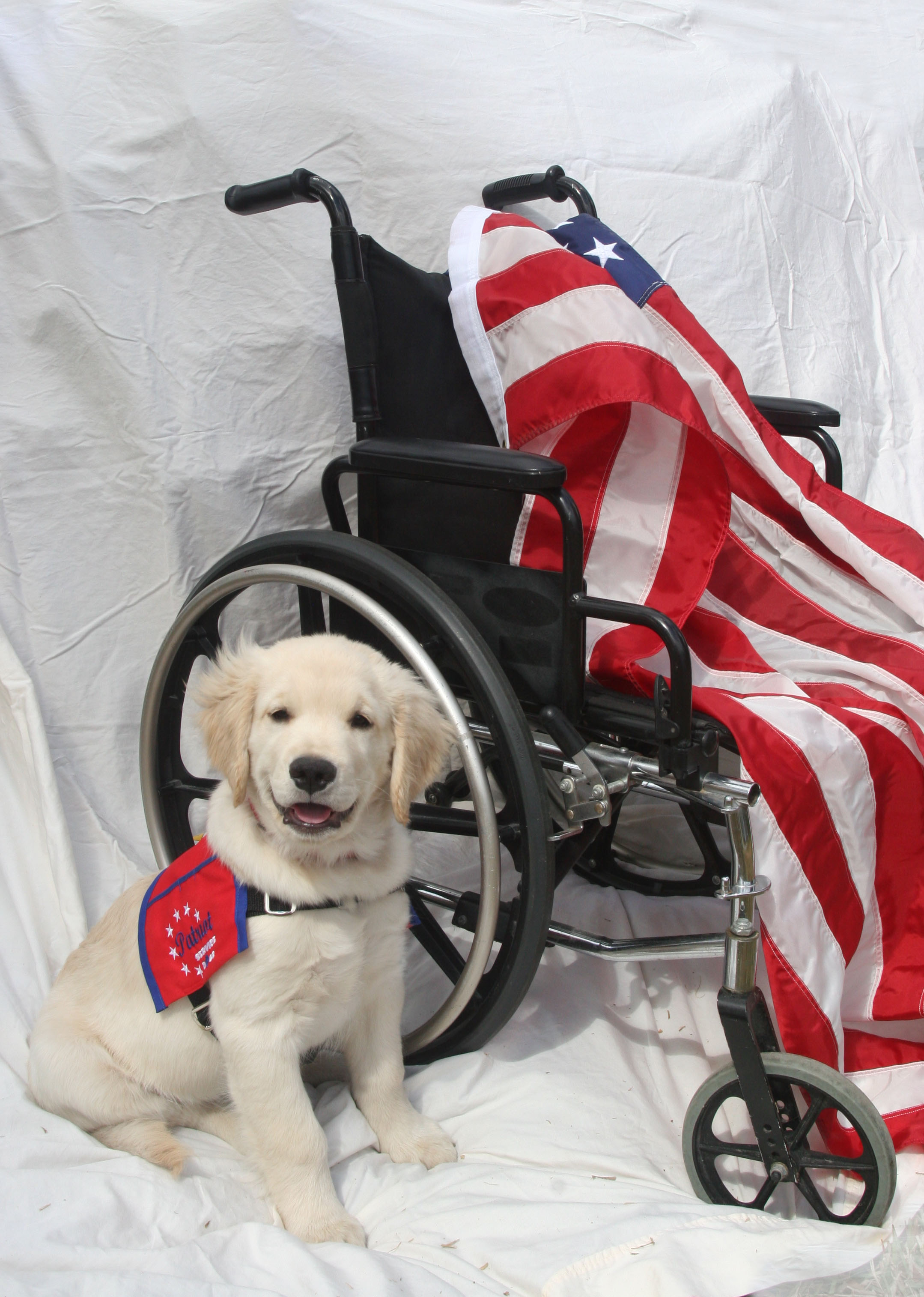 JustIce Patriot Service Dog