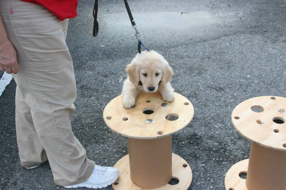 Service Puppy Training